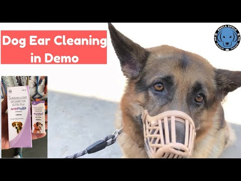 Pet Care - Dog Ear Cleaning in Demo - Bhola Shola