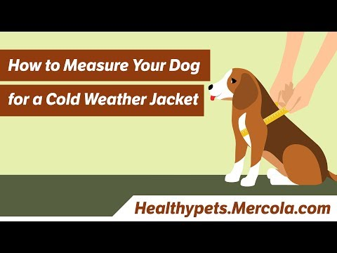 How to Measure Your Dog for a Cold Weather Jacket