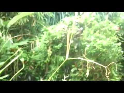 TRIPLANETLINDA VIDEOS :Bali