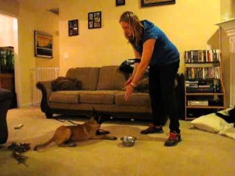 K9 180 Food Aggression towards other Dogs