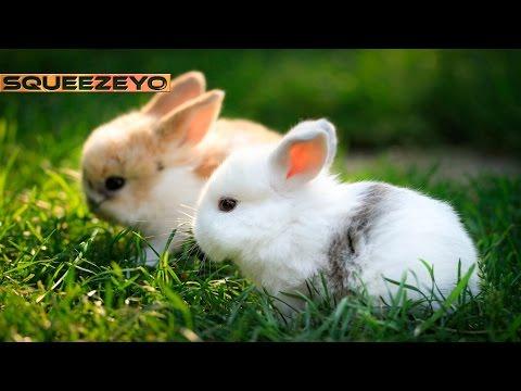 Lost Rabbit Gameplay #13