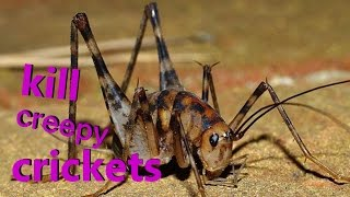 Kill All Crickets Fast
