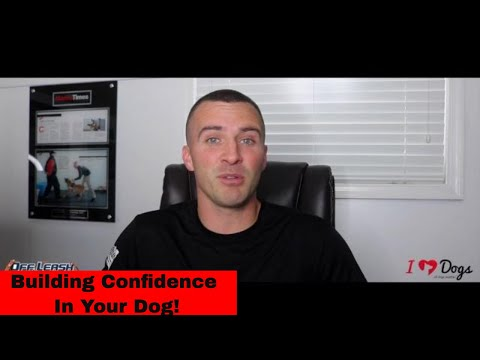 Scared, Skittish, Shy, or Nervous Dog?  4 Key Elements of Confidence Building   Off Leash K9