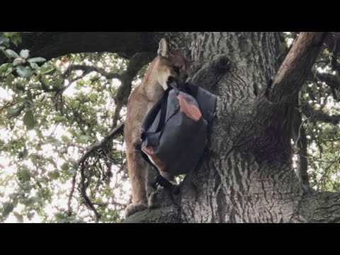 Xxx Mp4 Dad Saves Son From Mountain Lion 3gp Sex