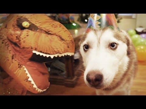Laika the Husky's Surprise Dinosaur Birthday Party!