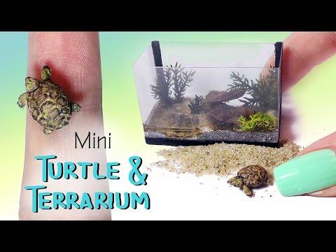 Miniature Turtle & Terrarium Tutorial // Dolls/Dollhouse