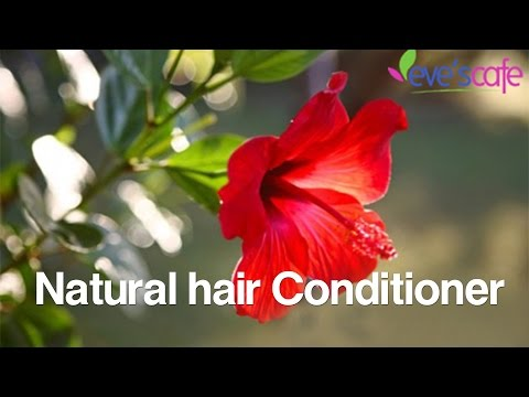 DIY : Hibiscus Hair Conditioner - Dry Hair Treatment