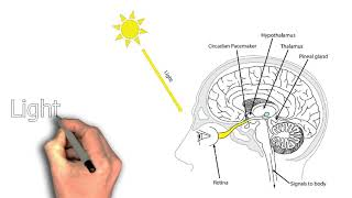 Why Am I Still Tired After a Full Night