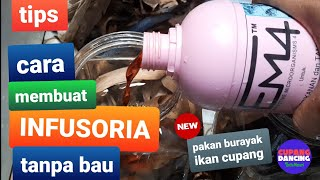 How To Infusoria Culture For Betta Cara Buat Infusoria Tanpa Bibit 2 Hari Jadi Untuk Anakan Cupang Clipmega Com