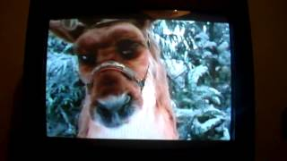Opening To Lady And The Tramp 2 Scamp S Adventure 2001 Vhs