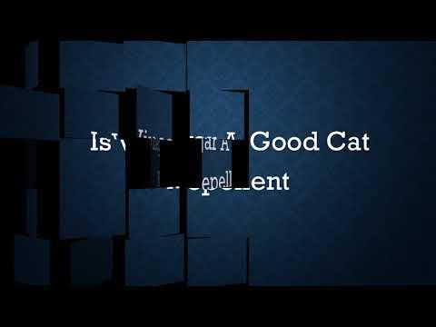 Is Vinegar A Good Cat Repellent