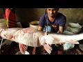 Big Long Whiskers Catfish Slice | Catfish Cut into Nice Pieces at Fish Market