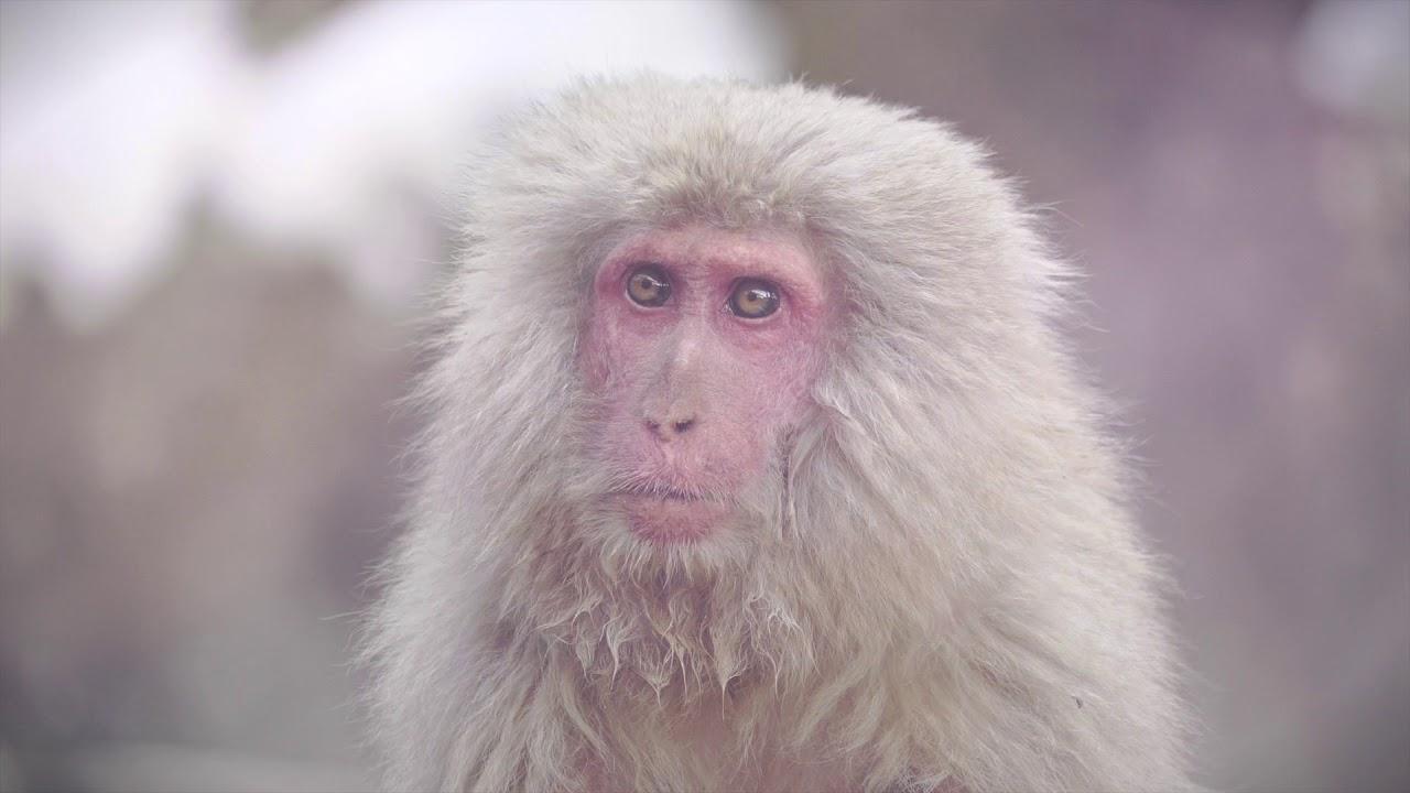 Jigokudani - Wild Monkey Park