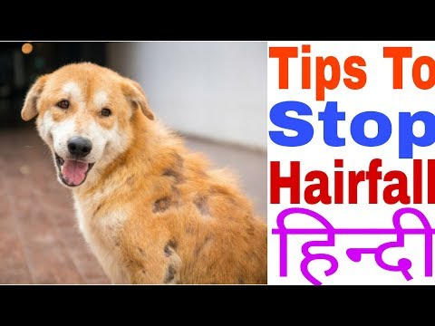 Tips to Stop Hairfall in Dogs and Puppies | In Hindi | 5 Tips