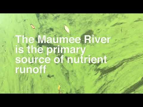 Algae bloom in Lake Erie brings green scum water