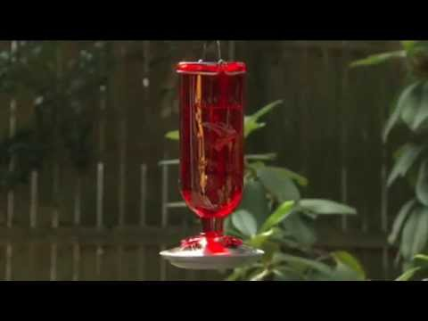 How to Attract Hummingbirds - Ace Hardware