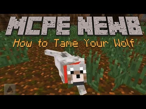 How to Tame a Wolf in Minecraft PE - 0.9.0