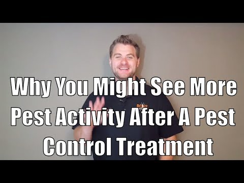 Why you might see more pest activity after a pest control treatment