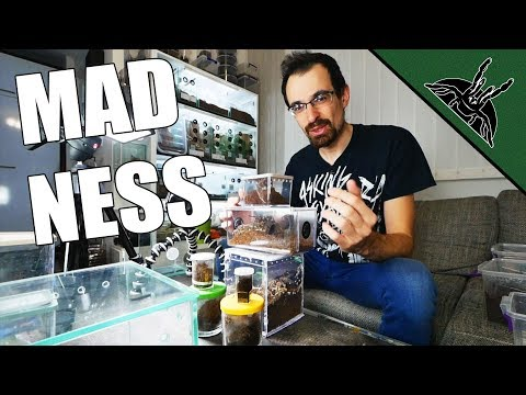 REHOUSE MADNESS 2!