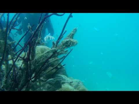 || SCUBA DIVING AT OCEAN PERL RESORT BEACH || HAVELOCK ISLAND || ANDAMAN & NICOBAR
