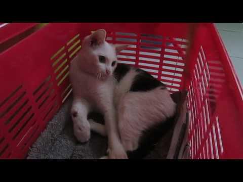 Pick up sick stray cat