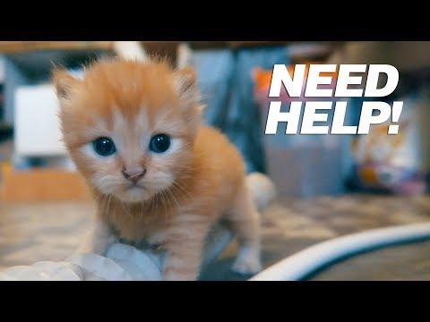 Missing Kitten!