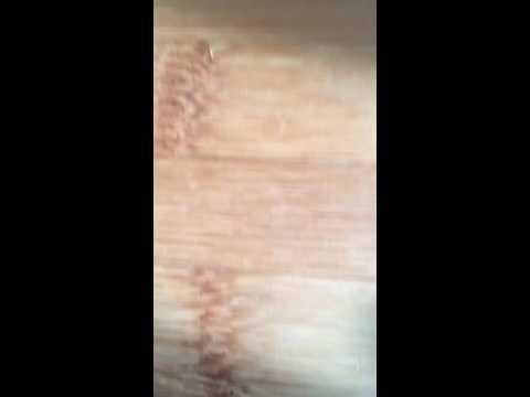 Bugs on wood?