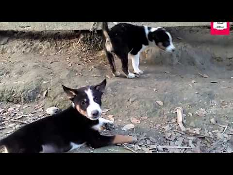 Dog or Puppy  Play Gets Too Rough ❘❘ Puppy Race  Competition ❘❘ Doh-Playing Puppy ❘❘ World Nature❘❘