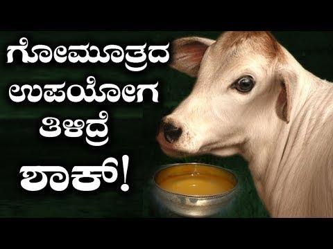 Know The Surprising Benefits Of Gomutra | ಗೋಮೂತ್ರ ಬಳಸಿದ್ರೆ ಏನೇನು ಲಾಭ ಗೊತ್ತಾ?