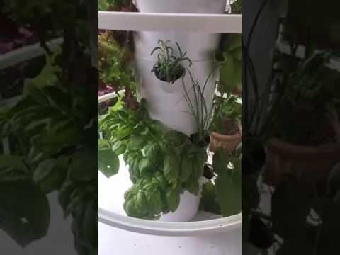 Kelly's Tower Garden Update