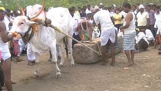 khillari bull pulling heavy weight stone in yadwad. festival.sharyat.stone bull 2.