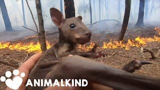 Rescuers race to save Australia's wildlife | Animalkind