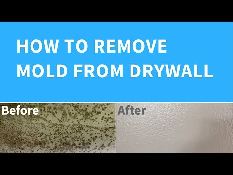 Removing Mold From Drywall