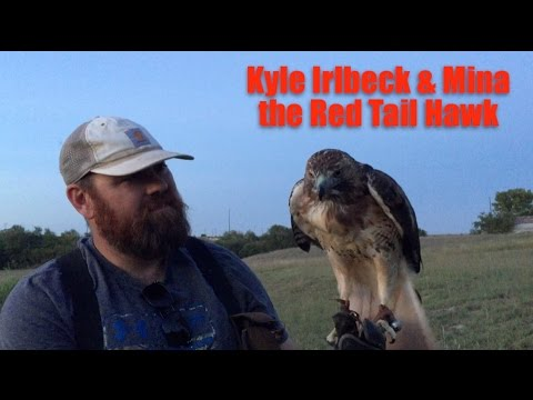 Mina the Red Tail Hawk
