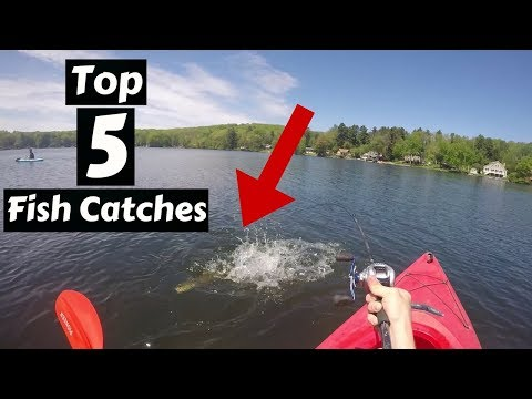Top 5 Fish Catches of 2017 ~ AllFishing TV