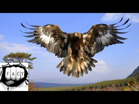 Top 10 Largest Eagles Around The World