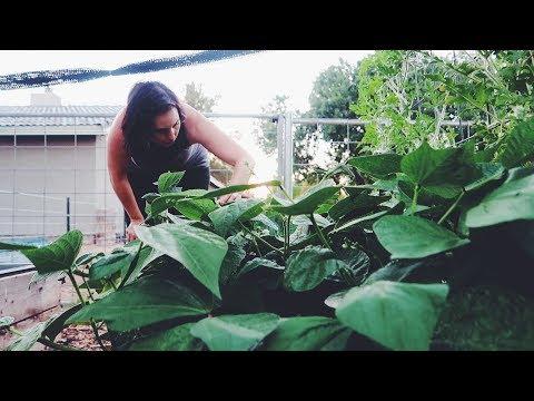 Planting Heat-Loving Veggies in the Summer in Arizona