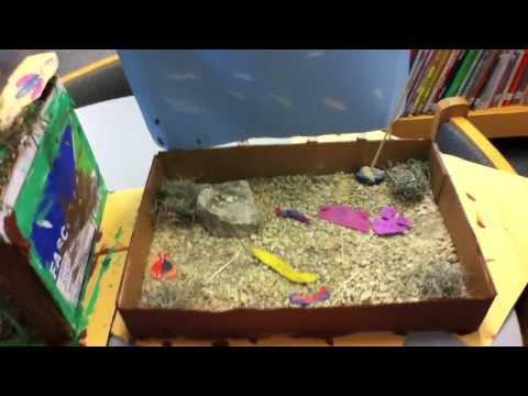First Grade Habitats