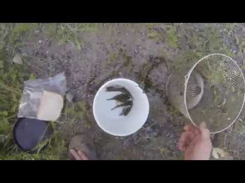 Brook Trout Fishing with live minnows