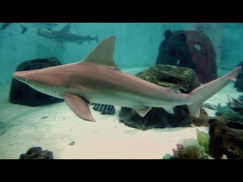 Mote Marine Laboratory & Aquarium Tour