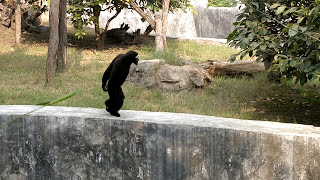 Delhi Zoo (Chidiyaghar), National Zoological Park Delhi
