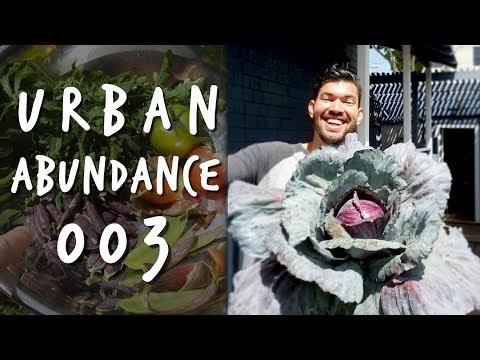 I Found a Hoverfly In The Garden | Urban Abundance 003