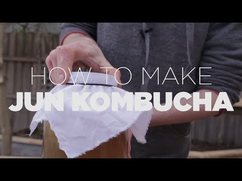 How to make an amazing Jun Kombucha