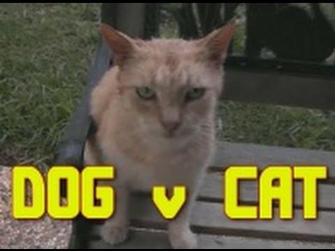 Funny video DOG v CAT deathmatch