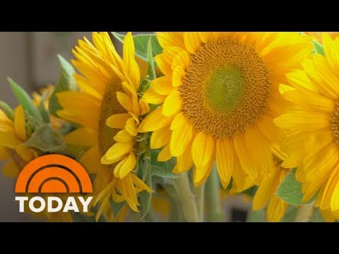 Keep Your Flowers Looking Fresh | TODAY