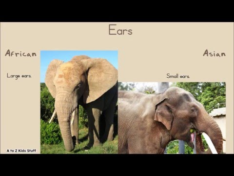 The Difference Between African Elephants And Asian Elephants