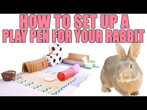 How To Set Up a Play Pen for Your Rabbit!