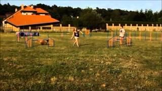 Kim, agility training in Prague [Fast & Furious] | 3rd August 2013