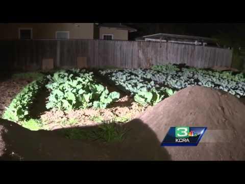 Sacramento City Council to rule on urban farms