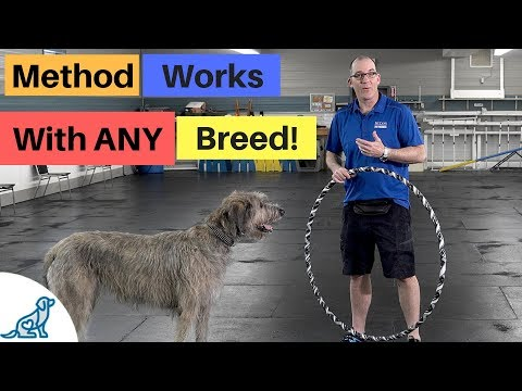 Teach Your Dog To Jump Through A Hoop- This Method Works With Any Dog!